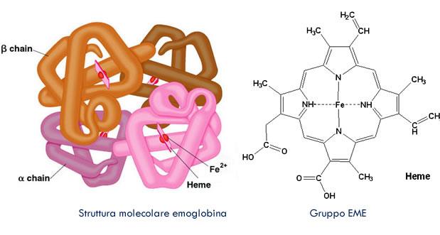 Catabolismo emoglobina